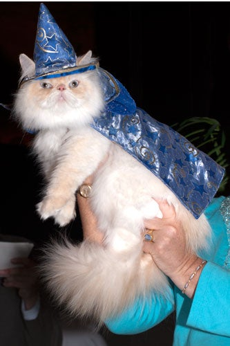 cat-fashion-show-59