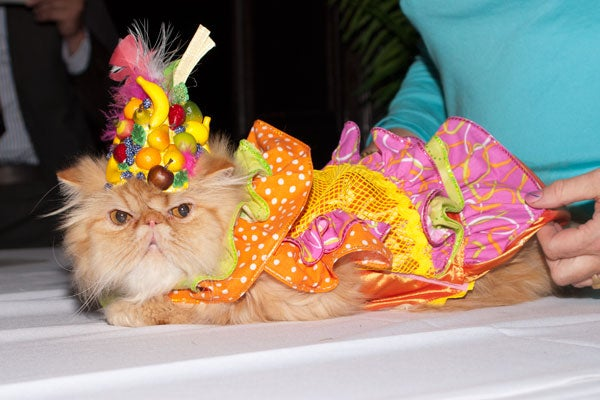 cat-fashion-show-41