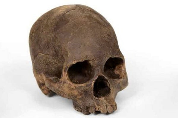 Chocolate-Skulls-Cast-From-Real-Human-Skull