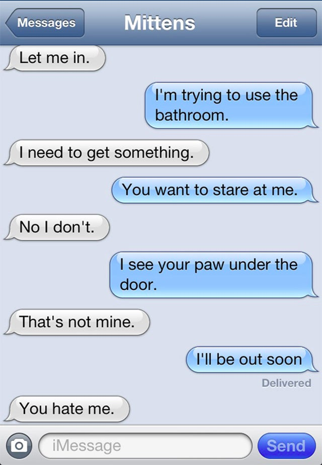 'Texts From Mittens' Cat Blog Is Funny, Sad, And True