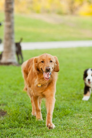 06-andy_lai_photography_refinery29_dogs_6