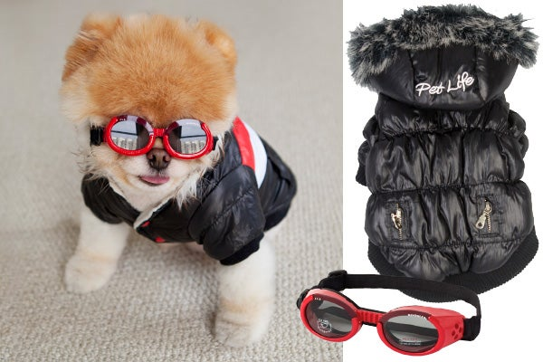 boo dog fashion