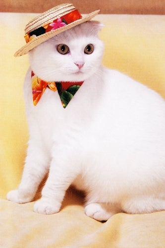 panama-hat-cat