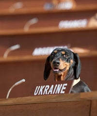 dachsund-UN