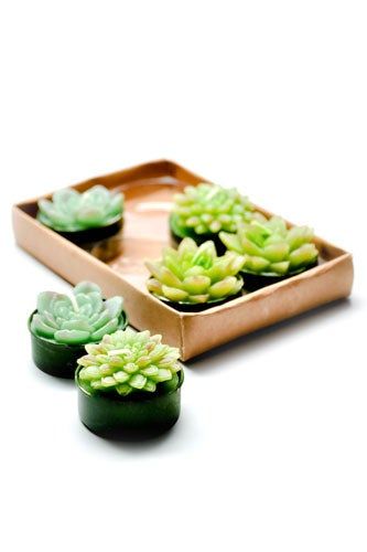 Succulent-Tea-Light-Candles_Leif_15