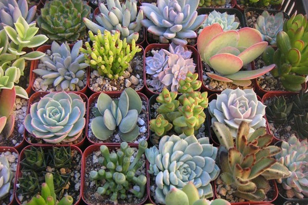 Gardening DIY For Apartments - How To Plant Succulents & Cacti on